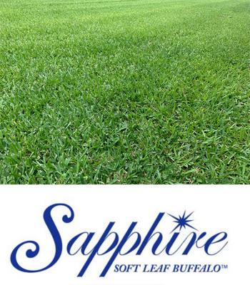 sapphire-turf-logo